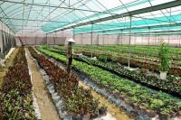 Đẩy mạnh ứng dụng khoa học - công nghệ vào tái cơ cấu nông nghiệp