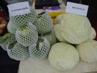 Bắp cải Trung Quốc tràn lan: Làm sao phân biệt hàng