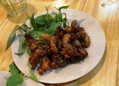 """""""Khoái khẩu"""" món ăn côn trùng: Cảnh báo nguy cơ ngộ độc"""