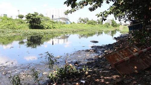 TP. HCM: Zika tăng nhanh do môi trường ô nhiễm nặng - Hình 2