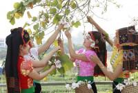 Điện Biên chuẩn bị cho Lễ hội Hoa ban hướng tới năm DLQG Lào Cai – Tây Bắc