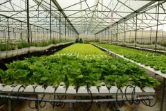 TP. HCM sẽ hỗ trợ 300 triệu đồng cho các dự án khởi nghiệp nông nghiệp