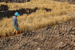 """Tổ chức hội thảo """"giải pháp giữ nước cho Đồng bằng sông Cửu Long"""""""