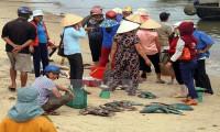Người dân tỉnh Quảng Trị nhận tiền bồi thường sự cố môi trường biển đợt 2