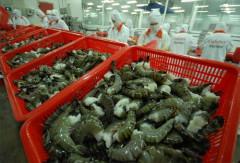 Triển vọng xuất khẩu tôm sang Đài Loan