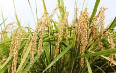 Nhiều công ty Nhật muốn làm nông nghiệp ở Việt Nam