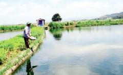 Hướng dẫn áp dụng quy định miễn, giảm tiền thuê đất