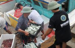 Hà Tĩnh: Sau tết, ngư dân lại hối hả ra khơi bám biển