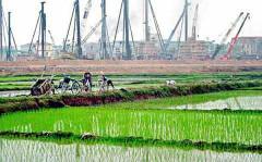 Hà Nội: 61,8 ha đất trồng lúa được Thủ tướng cho phép chuyển đổi sang đất phi nông nghiệp