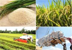 Xuất khẩu gạo của Thái Lan dự báo giảm trong năm 2017