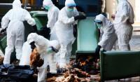 Dịch bệnh cúm A/H7N9 sẽ xâm nhập vào nước ta?