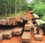 Kon Tum: Hàng chục khối gỗ vô chủ cất giấu tại rẫy cà phê