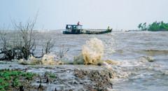 Cà Mau: Sạt lở đe dọa nghiêm trọng rừng phòng hộ ven cửa biển Hố Gùi