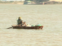 Hưng Yên: Nhộn nhịp vào mùa đánh bắt cá mòi trên sông Hồng