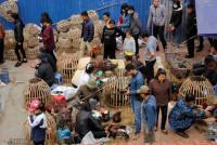 Hải Phòng: Độc đáo phiên chợ quê giữa lòng thành phố