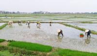 Sản xuất nông nghiệp ổn định trong những tháng đầu năm