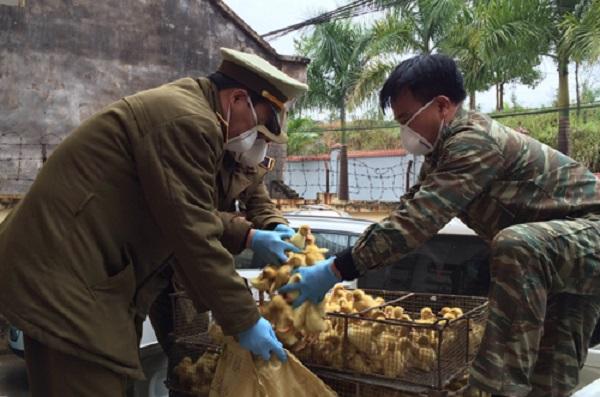 Lạng Sơn: Bắt giữ hơn 5000 con vịt con giống nhập lậu - Hình 1