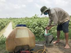 Kéo dài thời hạn dùng thuốc độc trong nông nghiệp: Có vì lợi ích nhóm?