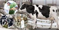 Triển lãm quốc tế ngành sữa và sản phẩm sữa - VIETNAM DAIRY 2017