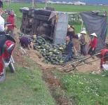 Hà Tĩnh: Người dân giúp tài xế gom 20 tấn dưa đỏ khi xe tải lật xuống ruộng