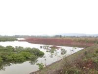 TP. Móng Cái (Quảng Ninh): Cho thuê - cấp GCNQSDĐ rừng phòng hộ?