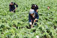 Việt Nam nhập khẩu 80% dược liệu
