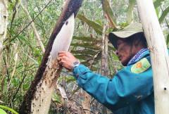 Huyện U Minh (Cà Mau): Xử lý người vận chuyển ong nuôi không rõ nguồn gốc