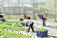 Làm sao thúc đẩy phát triển nông nghiệp hữu cơ?