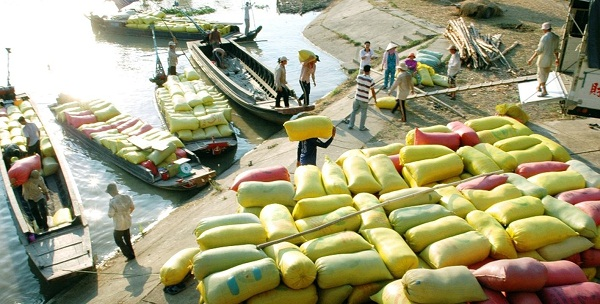 Gia tăng giá trị gạo Việt: Đổi mới, kiến tạo toàn diện - Hình 1