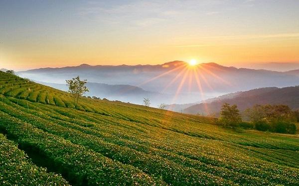 15 địa điểm check-in đẹp và mới Đà Lạt