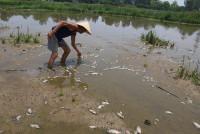 Xử phạt gần 100 triệu đồng công ty xả thải gây cá chết hàng loạt ở Đà Nẵng