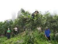 Bảo hộ quyền sở hữu trí tuệ: Ưu tiên phát triển sản phẩm nông nghiệp