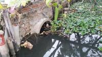 Vụ xả thải ra MT huyện Tiên Lãng (Hải Phòng): Sở TN&MT thông tin kết quả kiểm tra