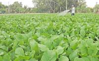 Tạo thuận lợi tốt nhất để thu hút doanh nghiệp đầu tư vào nông nghiệp
