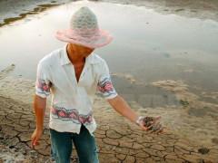 Phát huy tiềm năng nghề nuôi tôm trên cát