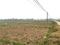 Huyện Hiệp Hòa (Bắc Giang): Thu hồi đất nông nghiệp của người dân rồi bỏ hoang suốt 10 năm?