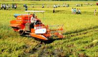 Ban hành 15 tiêu chí giám sát, đánh giá về cơ cấu lại ngành nông nghiệp