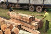 Các Hiệp hội ngành Gỗ Việt Nam cam kết không sử dụng gỗ bất hợp pháp