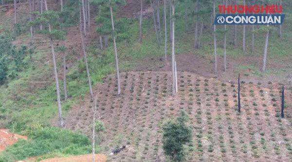 Lâm Đồng: Hàng trăm ngàn ha đất rừng bị lấn chiếm - Hình 1
