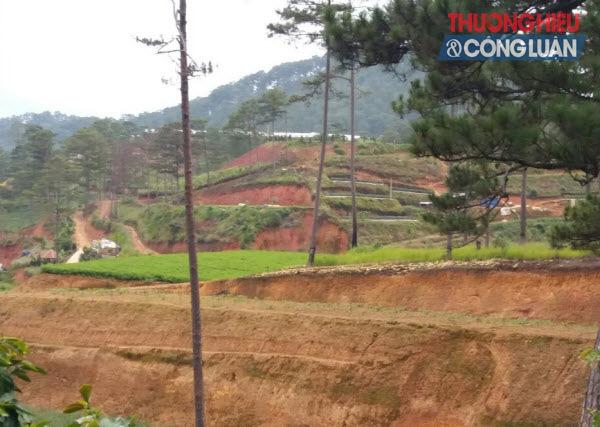Lâm Đồng: Hàng trăm ngàn ha đất rừng bị lấn chiếm - Hình 2