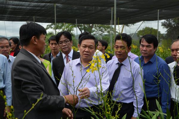 Phó Thủ tướng Vương Đình Huệ thăm mô hình SX ứng dụng NNCN cao tại Lâm Đồng - Hình 2