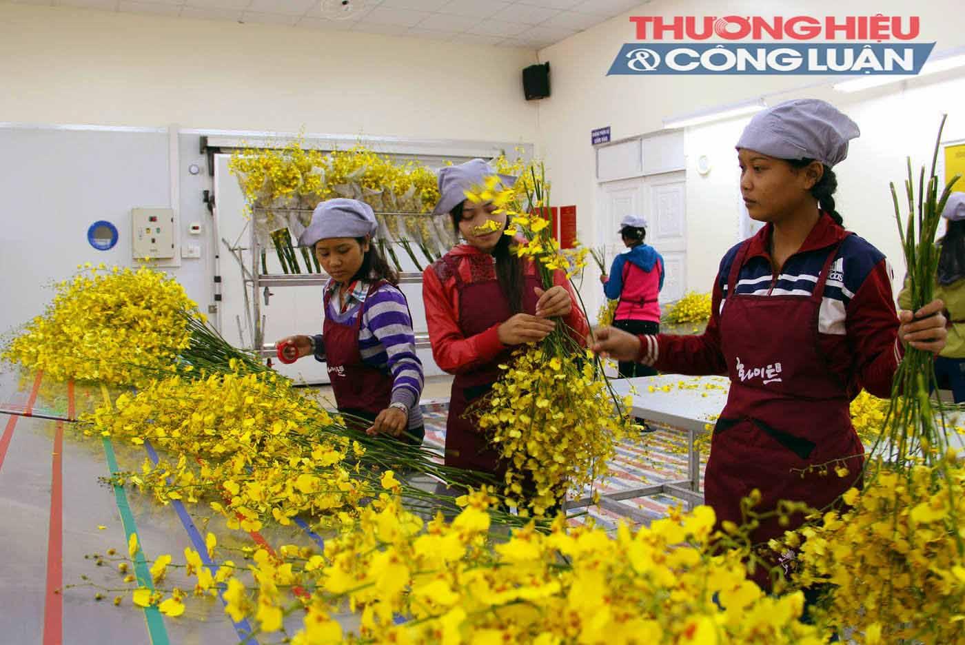 Tỉnh Lâm Đồng – TP. HCM: Hợp tác đưa rau sạch về phố - Hình 3