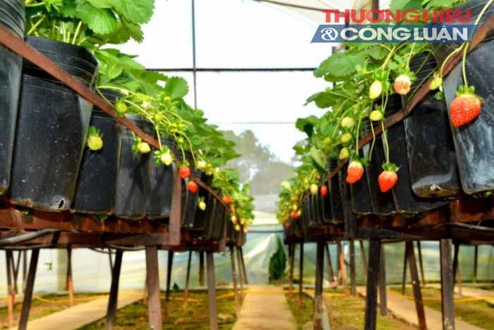 Tỉnh Lâm Đồng – TP. HCM: Hợp tác đưa rau sạch về phố - Hình 2