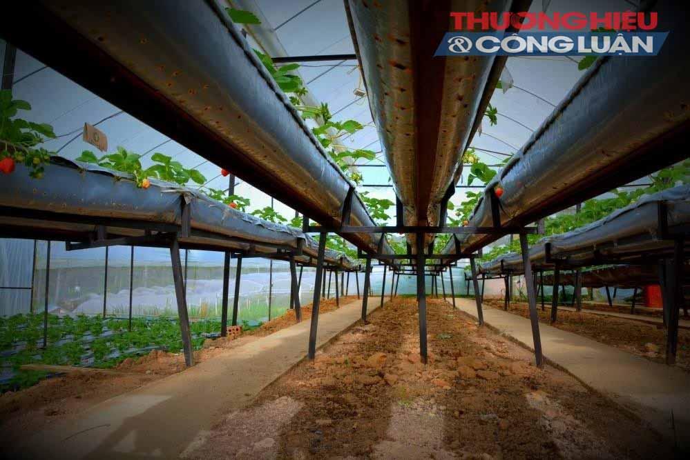 Tỉnh Lâm Đồng – TP. HCM: Hợp tác đưa rau sạch về phố - Hình 1