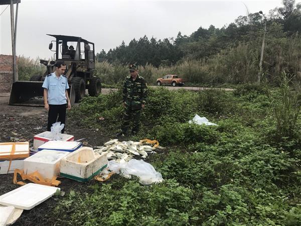 Quảng Ninh: Tiêu hủy 700kg cá chim Trung Quốc nhập lậu - Hình 1