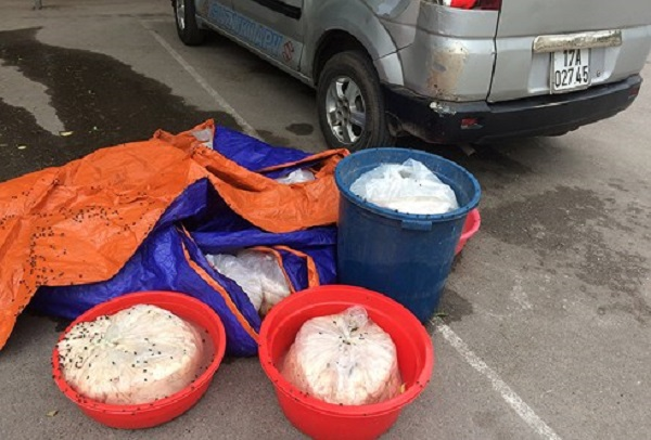 Quảng Ninh: Bắt giữ xe vận chuyển gần 200kg nội tạng động vật bốc mùi hôi thối