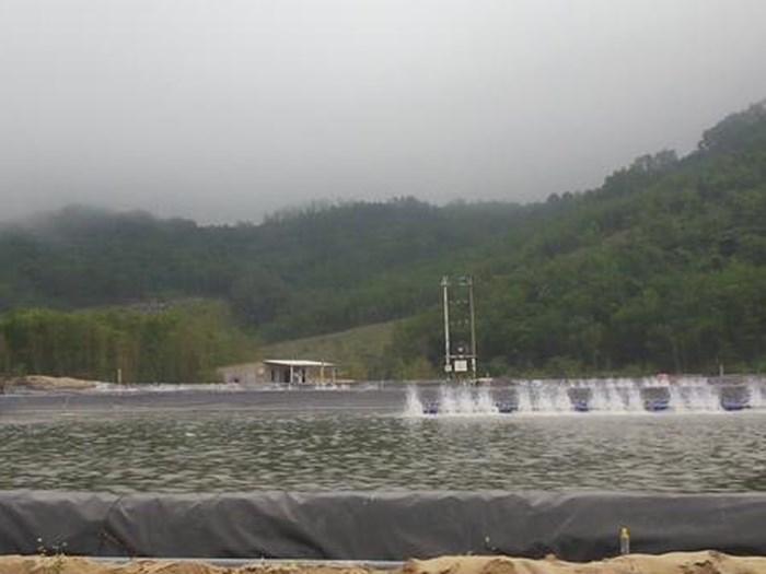 Thừa Thiên Huế: Nhiều cán bộ bị kỷ luật vì để người dân phá rừng làm hồ nuôi tôm - Hình 1