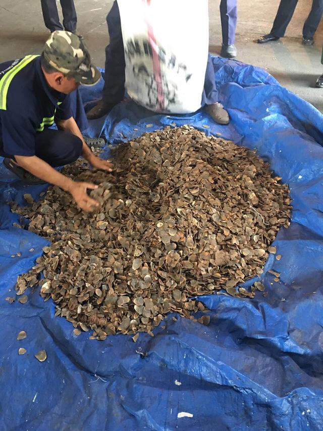 Phát hiện 3,3 tấn vảy tê tê trong lô hàng hạt điều - Hình 1