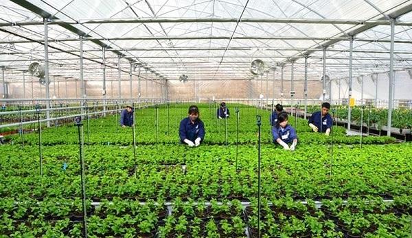 Agribank miền Trung giảm lãi suất cho vay trong lĩnh vực Nông nghiệp công nghệ cao - Hình 1