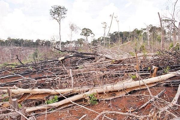 Đắk Nông: Giao khoán rừng không đúng đối tượng, trục lợi từ đất rừng